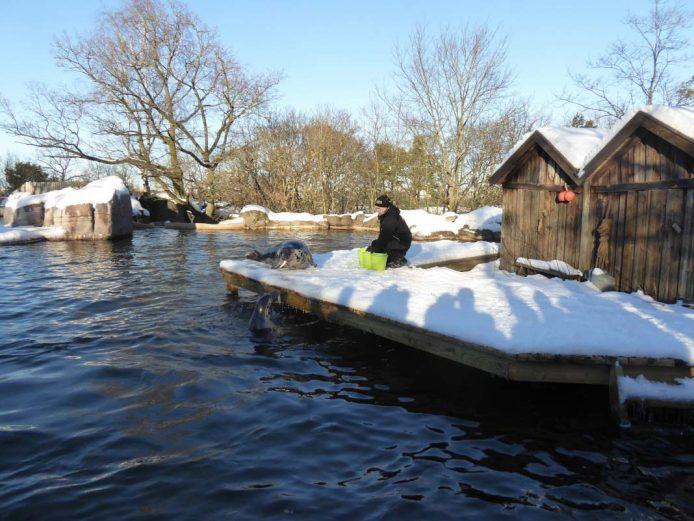 Recorre Skansen el museo al aire libre en Estocolmo