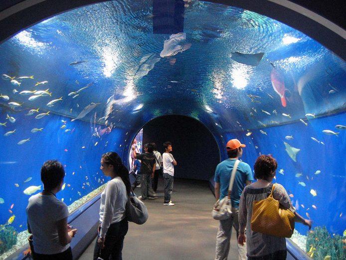 Visitar el acuario de Osaka