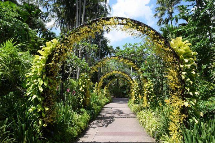 Conoce el Jardín Botanico de Singapur