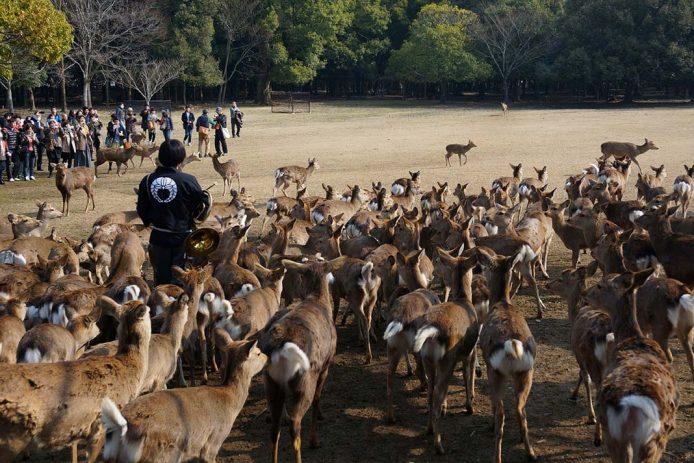 Parque de Nara, Japón