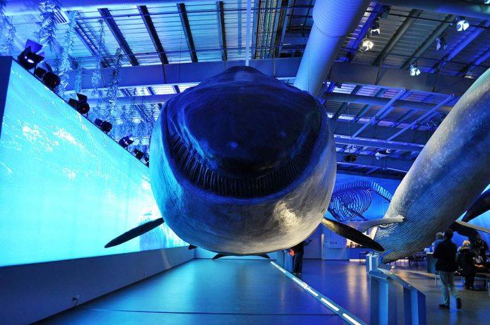 Museo de las Ballenas de Islandia
