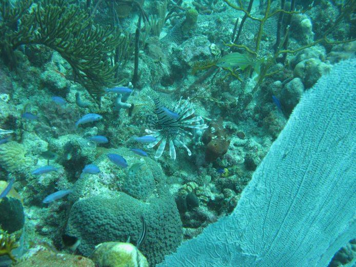Mira belleza de la vida marina