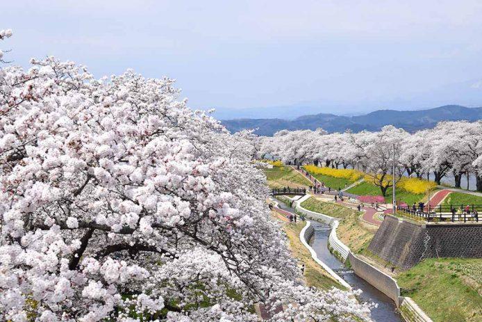 Primavera (marzo, abril, mayo) en Japón