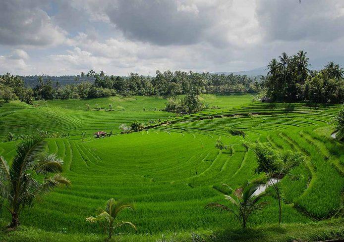 Visitar los arrozales en Bali