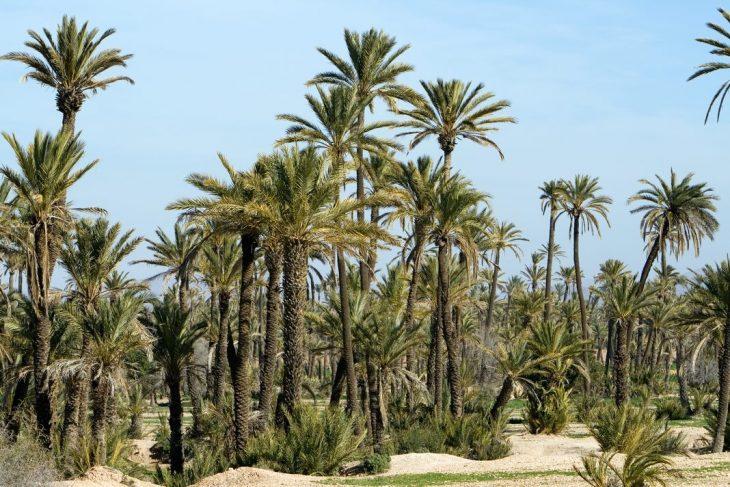 Dónde hospedarse en Marrakech
