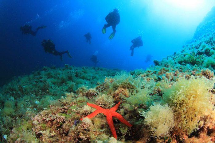 Qué hacer en Formentera: Bucear en aguas cristalinas