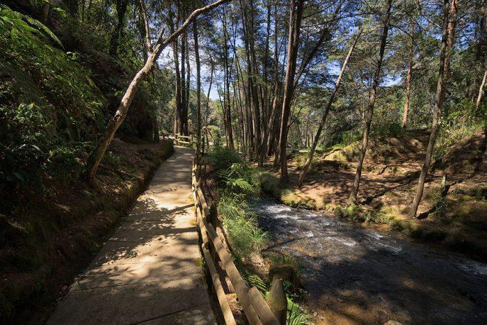 El Parque Regional Arvi es quizás una de las atracciones turísticas más imponentes para visitar en Medellín