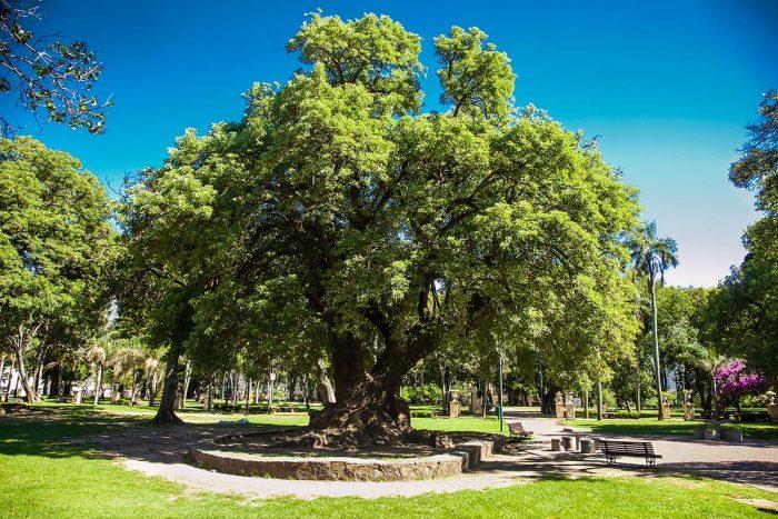 Visitar en Buenos Aires el Parque Lezama