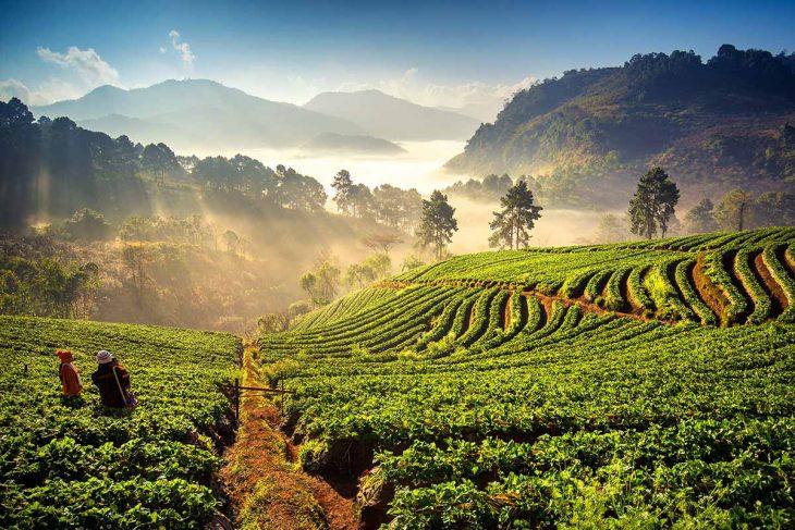Las mejores cosas que hacer en Chiang Mai