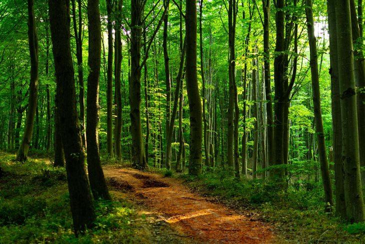 Una excursión al Bosque de Belgrado, Estambul